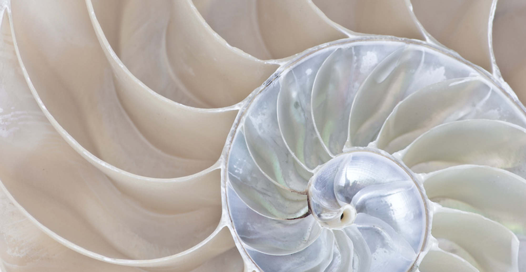 Equate_Feng_Shui_Nautilus_header1