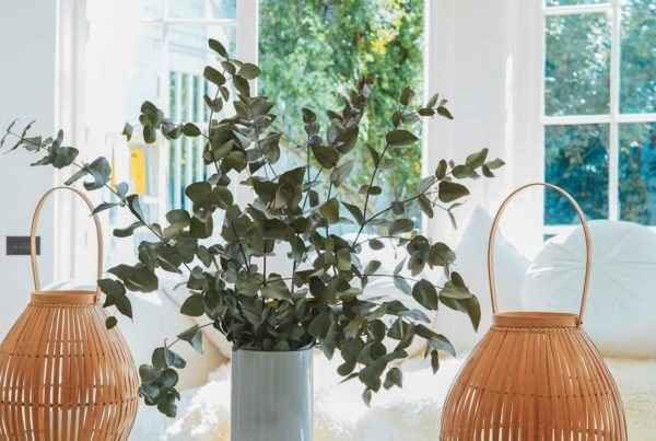 Nice white interior shot of eucalyptus in a vase in front of windows with white cushions and basketry lanterns