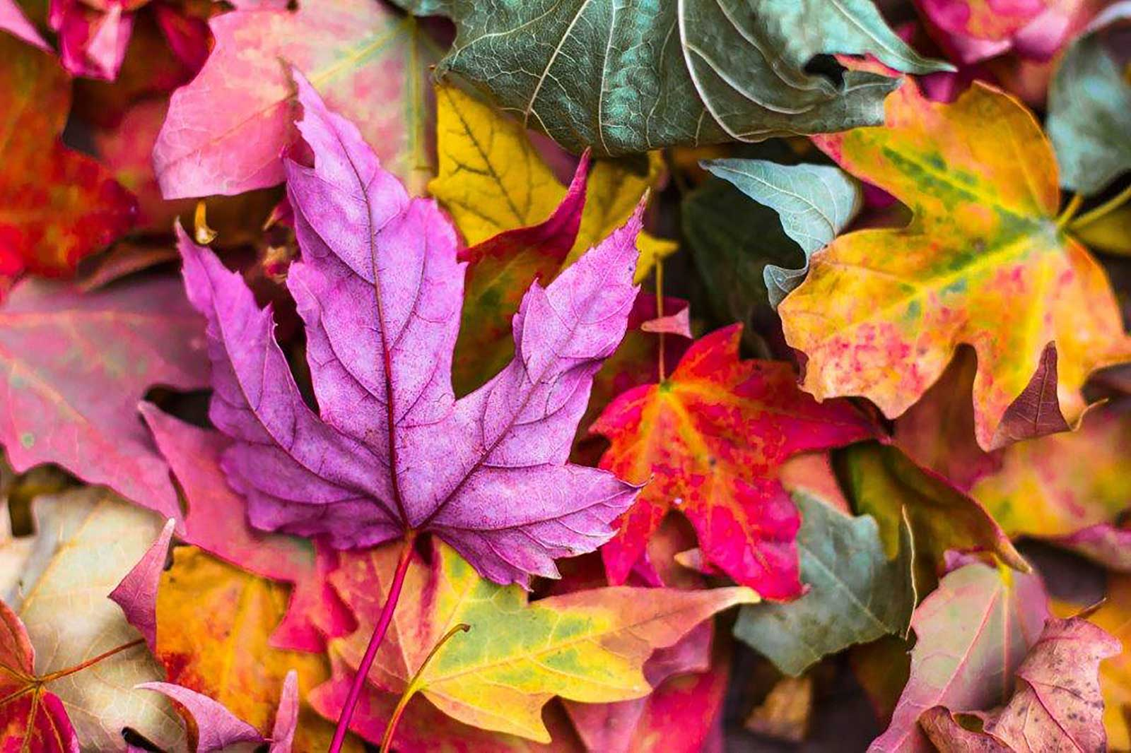 Autumn – Letting Go & Gathering In